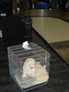 Как путешествовать с домашними животными - правила путешествия с животными на самолете и поезде.