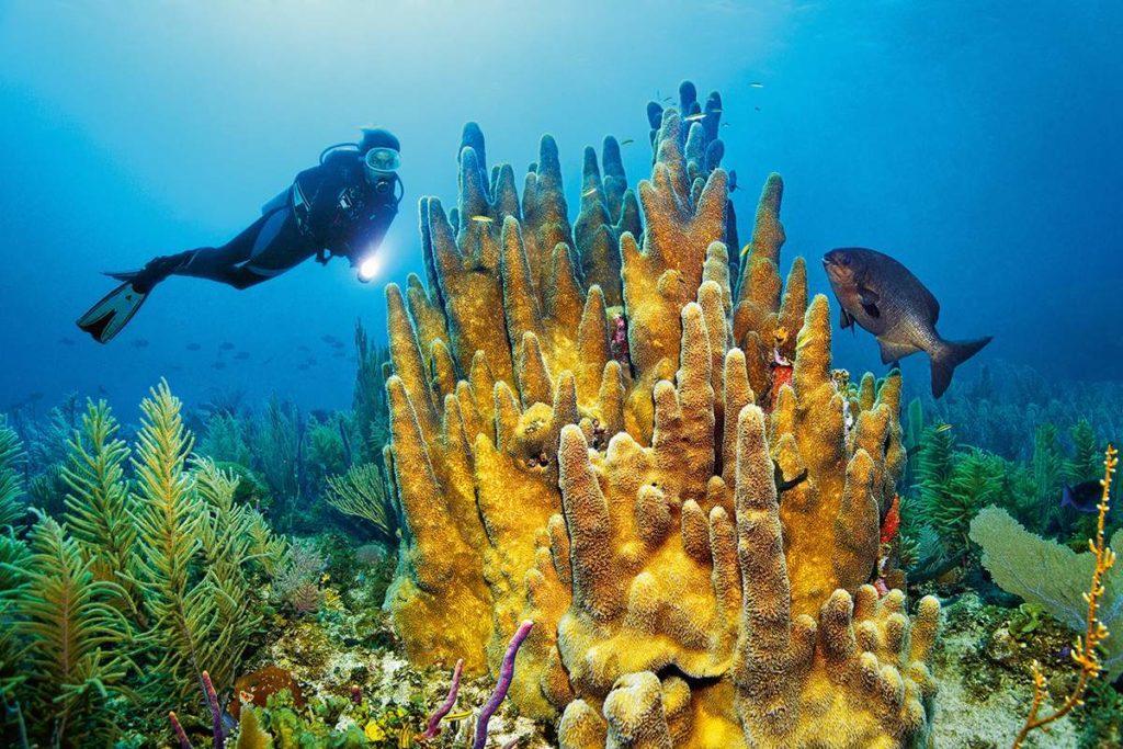 Лучшие достопримечательности Кайо-Коко на острове Куба: экскурсии и куда сходить самостоятельно